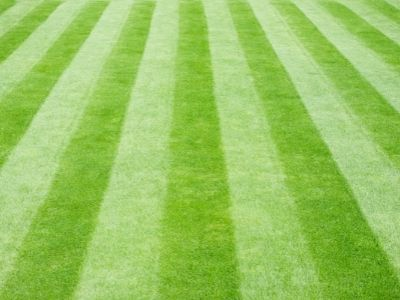 How to properly cut grass